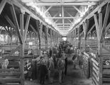 Montgomery County Fat Stock Show and Sale in Montgomery, Alabama.