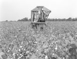 African American man operating a mechanical cotton picker in west Montgomery County, Alabama.