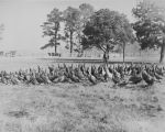 Copy photograph of turkeys on the farm at Bryce Hospital in Tuscaloosa, Alabama.