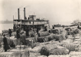 "Unloading cotton from the steamboat ""City of Knoxville"" at Decatur, Alabama."
