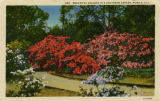 """Beautiful Azaleas in a Southern Garden, Mobile, Ala."""