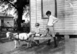 Children with a goat and cart in the dirt yard of a wooden house, probably in Furman, Alabama.