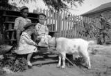 Children feeding a goat in a dirt yard, probably in Furman, Alabama.