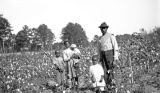 Albert Griffin with his children in a cotton field in Wilcox County, Alabama.