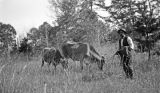 Golsby, an African American man, with two cows in rural Wilcox County, Alabama.