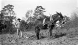 African American man plowing with a mule in rural Wilcox County, Alabama.