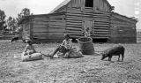 African American children with pigs in front of a barn in Wilcox County, Alabama.