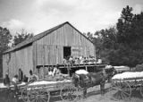 African Americans with wagons of cotton at a gin in Wilcox County, Alabama.