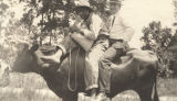 An African American man and a white man on the back of a steer in Russell County, Alabama.