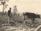 African American man plowing a field in Crawford, Alabama.