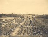 """Smith-Hughes (senior) class in 'Agricultural Education,"" in their school garden for..."