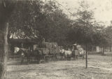 Horse-drawn wagons taking cotton from the gin in Burnt Corn, Alabama.