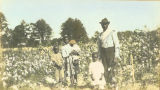 African American man and children standing in a cotton field.