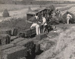 Making bales of peanut vines during a peanut harvest in Alabama.