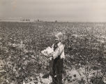 Eight-year-old Rhetta James Thompson picking cotton.