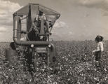 African American man operating a mechanical cotton picker on Price McLemore's Oaks Plantation in...