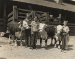 Three boys with their prize-winning cattle at the Cullman 4-H Fat Stock Show, sponsored by the...