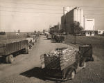 Trucks of corn outside a processing plant in Decatur, Alabama.