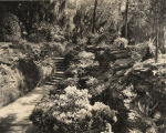 A path in Bellingrath Gardens