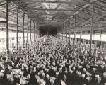 Interior of a chicken house in Alabama.