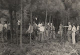 Vocational agriculture students at Leroy High School in Washington County, Alabama, pruning pine...