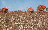 """Dothan Alabama. Cotton picking the Wiregrass area with modern mechanical cotton picking..."