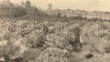 Two young African American boys sitting in a vegetable garden.