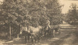 Team of mules pulling a large log down a dirt road.