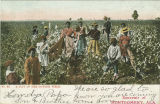 """A Day in the Cotton Field."""