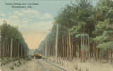 """Trolley Riding thro' the Pines, Montgomery, Ala."""