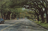 """The Live Oaks form a Tunnel on U.S. 90 - Government Street, Mobile, Alabama."""