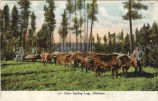 Oxen hauling logs, Alabama.