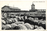 Cotton Scene, Demopolis, Alabama