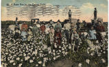 Busy day in the cotton field.