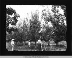 Gathering Pears near Beaver Meadow