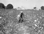 Boy picking cotton